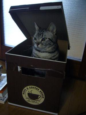 しまin箱4