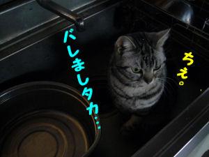 台所しま4