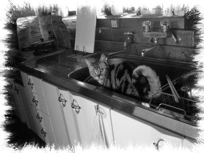 台所しま1