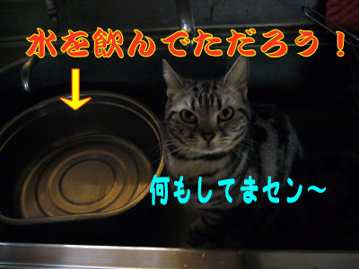 台所しま2