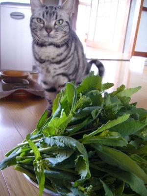摘み菜としま