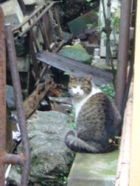 だんだん手前の猫2