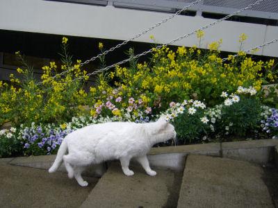 だんだん猫2