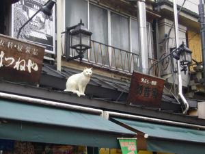屋根の猫?2