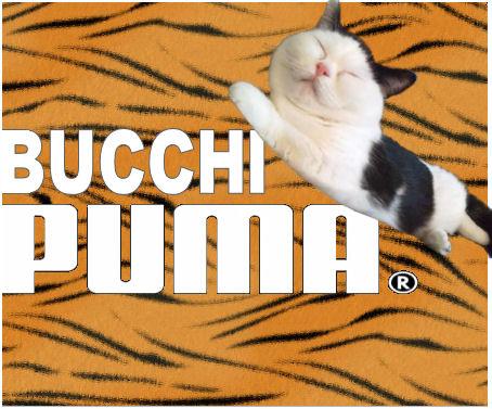 BUCCHI PUMA