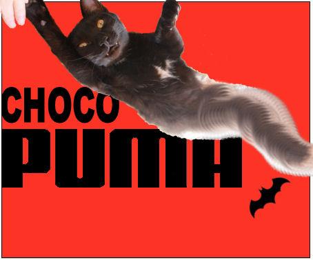 CHOCO PUMA