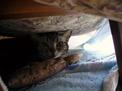 しまの隠れ家3