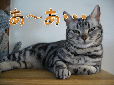 猫も呆れる