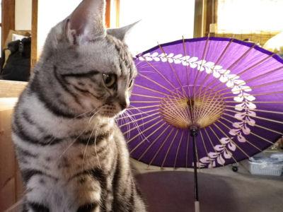 しまin番傘