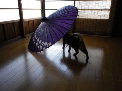 猫は傘が好き