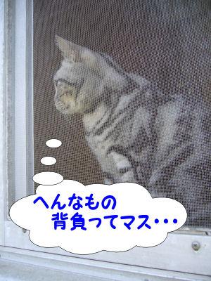 本日も監視猫