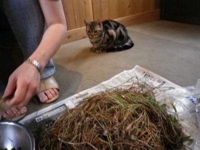 手伝ってくれない猫