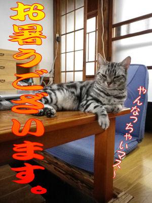 いきなり暑い!