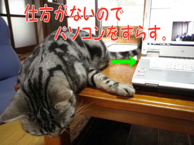 猫ではなくPCを・・・