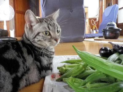 野菜としま