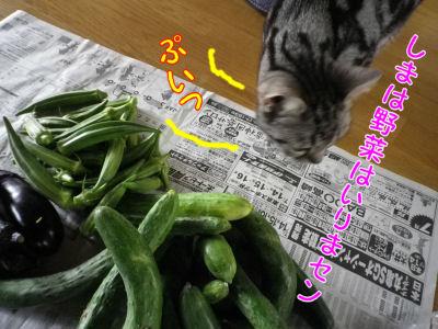 猫は食べない