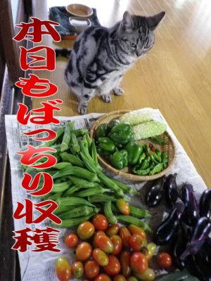 野菜で精いっぱい