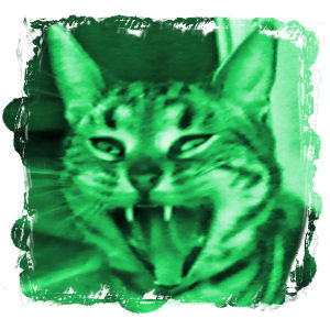 アクビ猫2