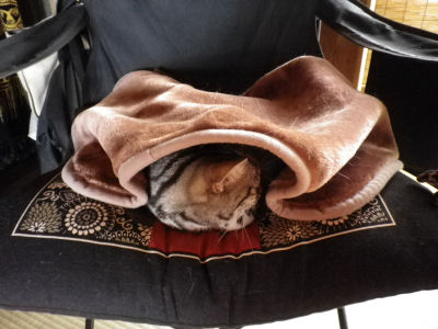 毛布でぬくぬく1