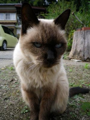 マイペース実家猫3