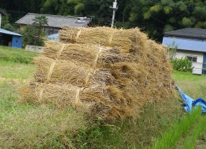 稲こき終了3