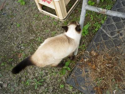 マイペース実家猫2