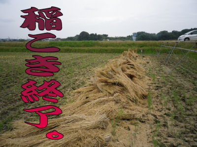 稲こき終了1