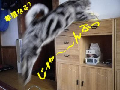 しまのジャンプ