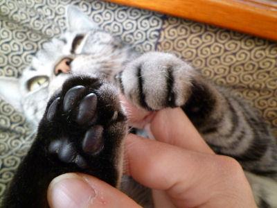 いじくられる猫3