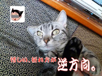いじくられる猫6
