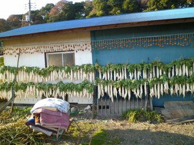 実家の大根と干し柿。