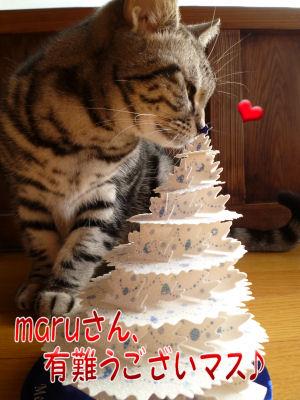maruさんありがとうございます!