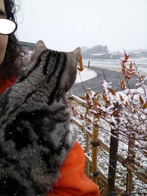 しまと雪1