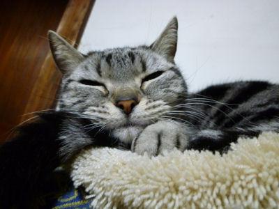 猫の日の猫5