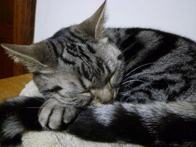 猫の日の猫6