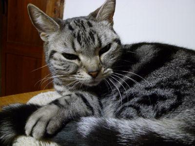 猫の日の猫4