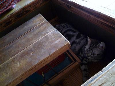 猫の日の猫1
