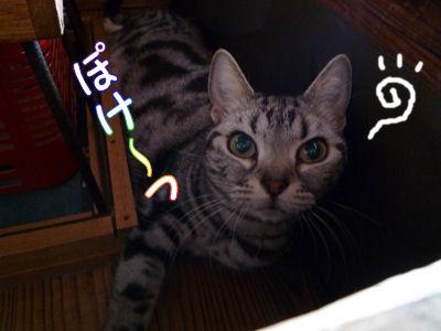猫の日の猫2