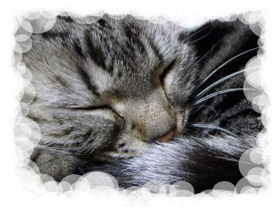 猫の日の猫7