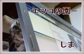 20110303025231448.jpg