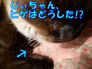昨日の実家猫2