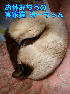 昨日の実家猫1