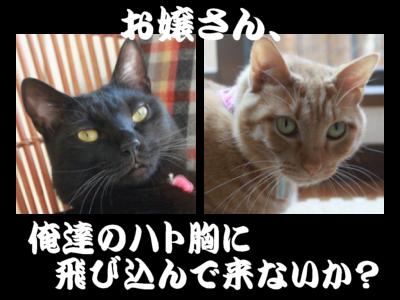 miyocom家のイケメン達
