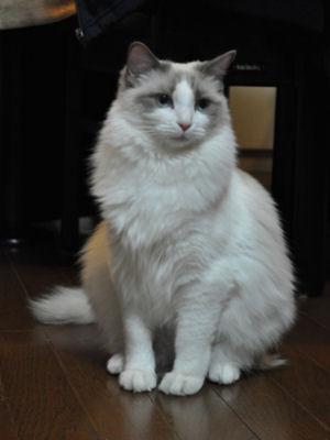 rinaさん家のcheru嬢