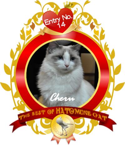 hatomune14 Cheru