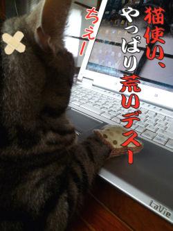 猫使いが荒い?