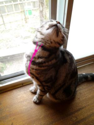 ジッパー猫