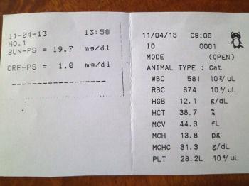 4月13日血液検査結果