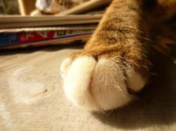 魅惑の指手袋