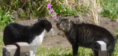 外猫の争い3